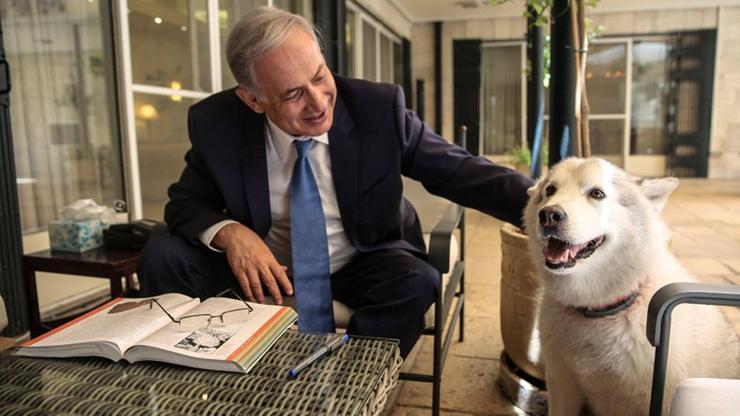 Pies izraelskiego premiera pogryzł jego politycznych gości